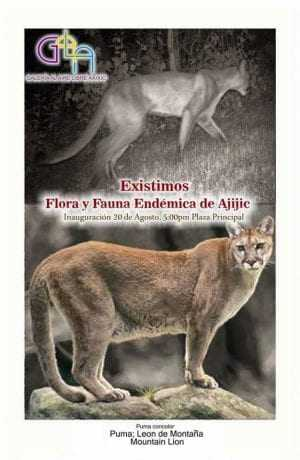"""Another GALA exhibit was """"We Exist: Flora and Fauna Endemic to Ajijic."""" This photo shows a mountain lion."""